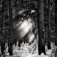 Winter Sparks :: Cat Loom