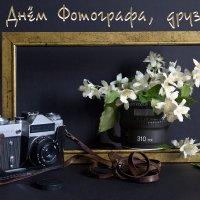 12 июля - День фотографа :: Татьяна Королёва