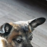 Собачка по имени МУХА :: Анна Приходько