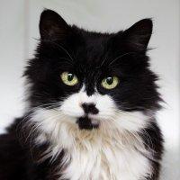 ЛАСКА, Центр помощи кошкам на Сахалине https://vk.com/laskasakhalin. Маркиза :: Margarita Ласковая