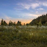 Цветущая поляна... :: Александр Попович