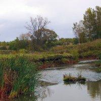 Осенний пейзаж у реки. :: Анатолий Круглов