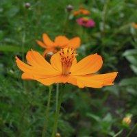 Цветочное лето -2 :: Тамара Бедай