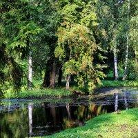 Гатчина. У заросшего озера. :: Nina Karyuk