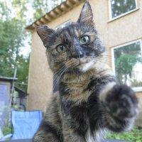 А ты любишь кошек? :: Виктор Орехов