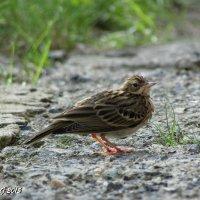 Маленькая птичка :: OLLES