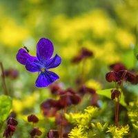Цветы лета :: Владимир Колесников