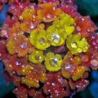 бриллианты на цветке :: igor G.