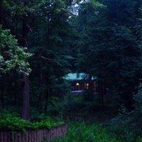 В тёмно-синем лесу. :: Oleg4618 Шутченко