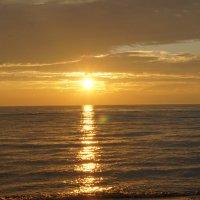 Вечернее солнце над Финским заливом :: Александр Горячев