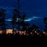 Рассвет в лесу :: Людмила Волдыкова