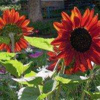 Яркое лето! :: Тамара Бедай