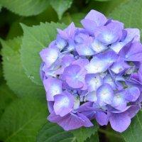Цветы :: Ольга Соловьева