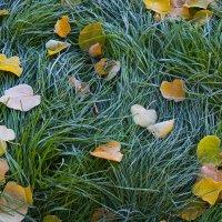 Местами на почве заморозки :: Гектор