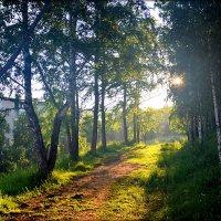 Утро..луч солнца.. :: Александр Шимохин