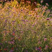 цветочная изысканность :: Олег Лукьянов