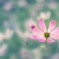 Pink umbrella :: Наталья Киселёва