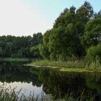 Зеркальное отображение на воде :: Сергей