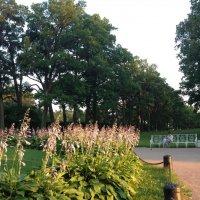 Вечерняя прогулка в парке. :: Татьяна