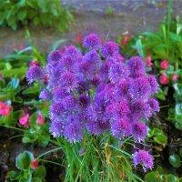 Цветы у Большого Гатчинского Дворца... :: Sergey Gordoff