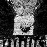 Nature morte :: AleksSPb
