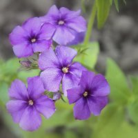 Летние цветы :: Валентина