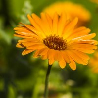 растворяясь в цветах лета :: Петр Беляков