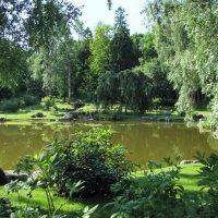 В японском саду Кадриорга :: veera (veerra)