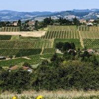 виноградники региона Божоле (Beaujolais) :: Георгий