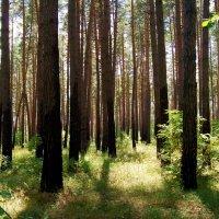 лес (Шахово) :: Елена Кирьянова