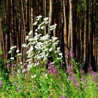 Цветы на опушке :: Александр Подгорный