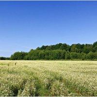 Летнее поле. :: Валерия Комова
