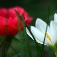 Red&White :: Олег Шендерюк