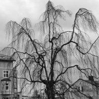 Необычное дерево :: Олег