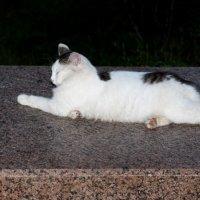 Спящая или Спящий  на постаменте :: Dr. Olver ( ОлегЪ )