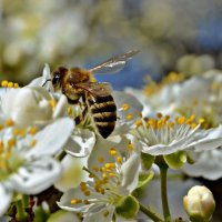 Пчелка :: Валентина