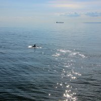 Весёлый дельфинчик. :: Лариса Исаева