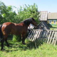 Напою коня... :: Mariya laimite