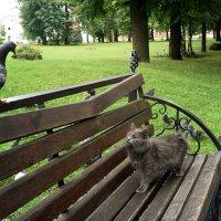 Серый в недоумении, голуби совсем страх потеряли. :: Татьяна Помогалова