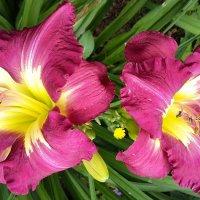Пора цветения! :: ирина
