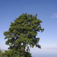 Деревце на берегу озера :: lady v.ekaterina