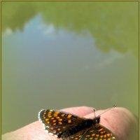 Бабочка над прудом :: Антонина Балабанова