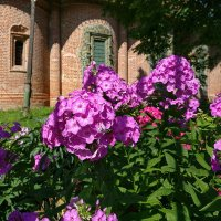 Летом в Ярославле, возле церкви Николы Мокрого :: Николай Белавин