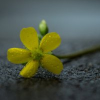 цветок :: Iulia Efremova