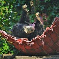 Медведь-губач :: Константин Анисимов
