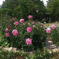 Летний сад :: натальябонд бондаренко