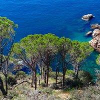 Море и сосны :: Лариса