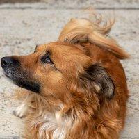 Моя собака :: Игорь Сикорский
