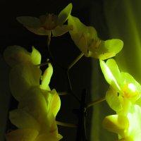 Орхидея :: Павел C