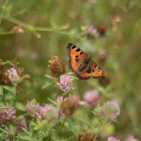 Бабочка :: Malinka Art Galina Paigetova